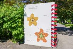 Botanisch onderzoek bij de Botanische Tuin van Montreal stock foto's