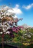 Botanisch park royalty-vrije stock afbeeldingen