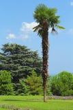 Botanisch park royalty-vrije stock afbeelding
