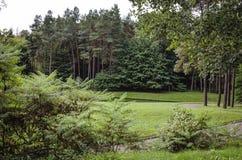 Botanisch park met een reeks bomen stock foto's
