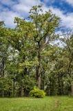 Botanisch park met een reeks bomen royalty-vrije stock foto
