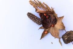 Botanisch stilleven in bruine tonen tegen wit royalty-vrije stock foto's