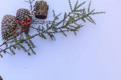 Botanisch stilleven met pinecones met bessen stock afbeelding