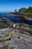 Botanisch strand royalty-vrije stock afbeelding