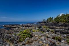 Botanisch strand royalty-vrije stock foto