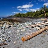 Botanisch strand stock afbeelding