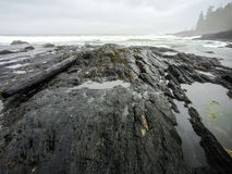 Botanisch Strand, Juan de Fuca Trail, Haven Renfrew, BC, Vancouver royalty-vrije stock foto's