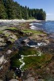 Botanisch Strand op het Eiland van Vancouver stock afbeelding