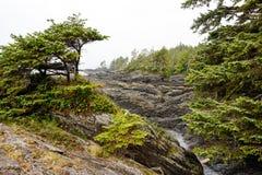 Botanisch Strand Provinciaal Park, Haven het Eiland van Renfrew, Vancouver, Brits Colombia Canada royalty-vrije stock fotografie