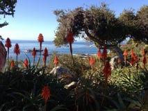 Botanisch tuinstrand Royalty-vrije Stock Afbeelding