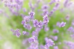 Botanische achtergrond Stock Foto