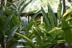 Botanische Ansicht Lizenzfreies Stockbild