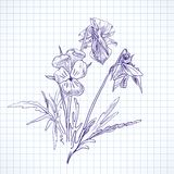 Botanische bloemen Royalty-vrije Stock Foto's