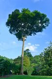 Botanische de Tuinreeks van Singapore royalty-vrije stock afbeeldingen