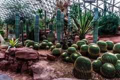 Botanische de Tuinserre 14 van China Shanghai royalty-vrije stock foto