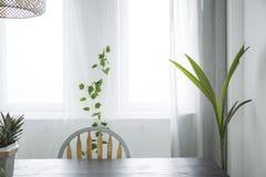 Botanische eetkamer met venster royalty-vrije stock afbeeldingen