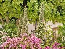 Botanische Frühsommermagie in Vilaflor auf Teneriffa lizenzfreie stockfotografie