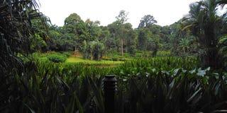 Botanische Gärten Singapurs lizenzfreie stockfotografie