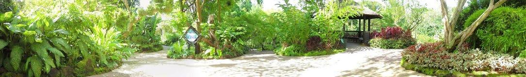 Botanische Gärten Singapurs Lizenzfreie Stockbilder