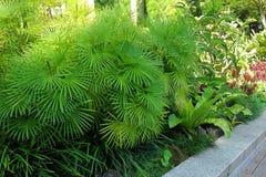Botanische Gärten Singapurs Lizenzfreies Stockbild