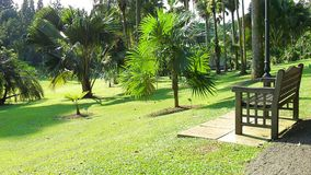 Botanische Gärten Singapurs Lizenzfreie Stockfotos
