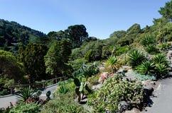Botanischer Garten Wellingtons Stockbilder