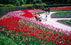 Botanische gargen nyc royalty-vrije stock foto