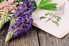 Botanische Illustration Medizinische Anlagen Alter Kräuterkenner des offenen Buches Stockfotografie