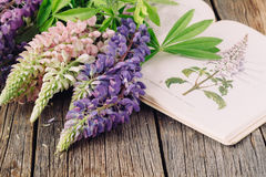 Botanische Illustration Medizinische Anlagen Alter Kräuterkenner des offenen Buches Stockbilder