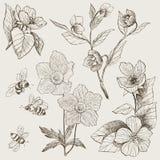 Botanische Illustrationsblumen der Weinlese eingestellt Stockfotografie