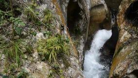 Botanische installaties in Gorges DE La Fou, Frankrijk stock videobeelden