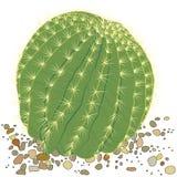 Botanische Kaktuspflanze Lizenzfreies Stockbild