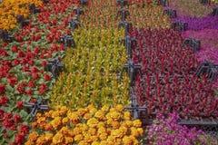 Botanische markt Diverse bloemen in kratten stock foto