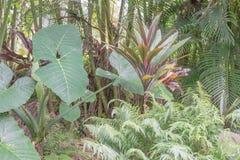 Botanische Mischung lizenzfreie stockfotos