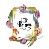 Botanische mit Blumenblumen der roten purpurroten Tulpe Aquarellhintergrund-Illustrationssatz Feldgrenzverzierungsquadrat lizenzfreie abbildung