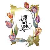 Botanische mit Blumenblumen der roten purpurroten Tulpe Aquarellhintergrund-Illustrationssatz Feldgrenzverzierungsquadrat lizenzfreie stockbilder