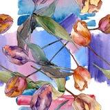 Botanische mit Blumenblumen der roten purpurroten Tulpe Aquarellhintergrund-Illustrationssatz Nahtloses Hintergrundmuster lizenzfreie abbildung