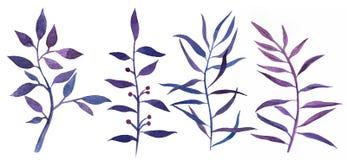 Botanische natürliche Elemente des Aquarells Lizenzfreie Stockbilder