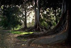Botanische parkland Royalty-vrije Stock Foto's