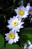 Botanische Tuin Flor Royalty-vrije Stock Foto's