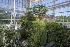 Botanische tuin Padua/ITALIË - Juni 16, 2018: Verbazende tropische groenbomen, struiken en installaties met groene bladeren binne stock foto