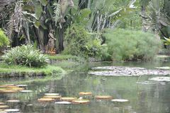 Botanische Tuin in Rio de Janeiro, Brazilië Royalty-vrije Stock Afbeelding