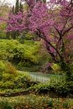 Botanische tuin in Tbilisi Stock Foto's