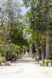 Botanische Tuin van Palermo Royalty-vrije Stock Foto's