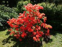 Botanische tuin van Peter Groot de stad van St. Petersburg In deze plaats kunt u voorbeelden van installaties, bloemen, vruchten  stock foto's