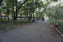 Botanische Tuin vladivostok Primorye Rusland Royalty-vrije Stock Fotografie