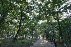 Botanische Tuin vladivostok Primorye Rusland Royalty-vrije Stock Afbeeldingen