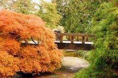 Botanische tuinbrug in de herfst stock fotografie