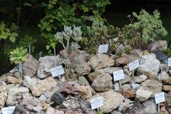 Botanische Tuinen Wenen Stock Foto