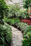 Botanische tuinserre met vele groene bomen, installaties en kleurrijke bloemen Royalty-vrije Stock Afbeeldingen